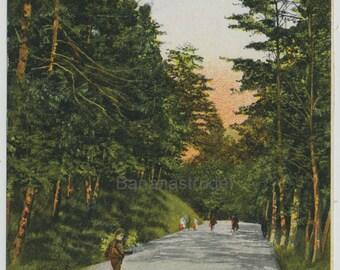 Vintage Postcard of Toronto - View in High Park - 1910 Old Toronto Postcard - Memorabilia