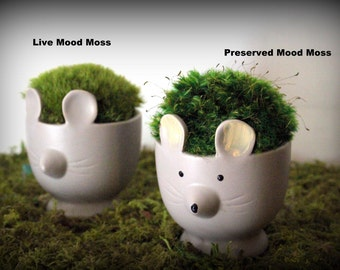 Live Moss Mouse planter-Mouse and moss-Mood moss-Live or preserved moss