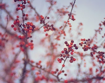 winter nature photography, botanical photograph, holiday decor, snow, red berries, tree, cold, frosty, berry / winter red