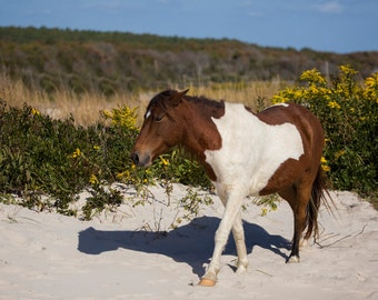 Horse on Beach Photograph - 11x14 Color Horse Equine Photography Print
