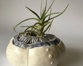 White and Purple  Wall Hanging Sea Urchin Planter Pod Ceramic Air Plant Holder