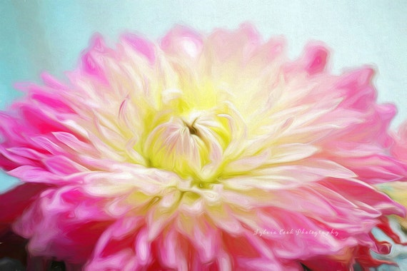 Summer dahlia, fine art print, floral photography, pink, aqua,flowers, floral,pastel,cottage decor,shabby chic,