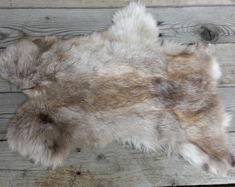 One Average Rabbit Hide as Shown. Lot No. 160626-Y