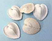 Beach Decor - Natural Heart-Shaped Shells - Set of 5 - beach weddings events nautical