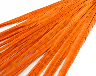 "Pheasant Feathers, 10 Pieces - 20-22"" Orange Bleached and Dyed Long Ringneck Pheasant Tail Feathers : 4138"