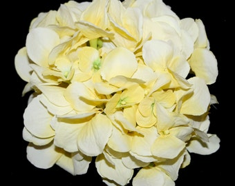 Large Hydrangea Bunch in Light Yellow- Full Head - PRE-ORDER