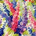 Philip Jacobs Delphinium, pastel, white, OOP, rare, Kaffe collective, early Westminster, floral fabric, spring fabric