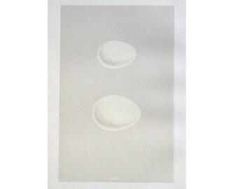 1875 DUCK EGG print antique original hand colored lithograph - teal & wigeon duck eggs - bird egg print