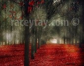Rustic Home Decor, Nature Photography, Red Fall Forest Print, Black Red, Fairy Tale, Trees Photo, Mens Gift