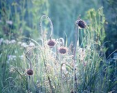Nature Photography, Prairie Wildflowers, Blue Flower Photo, Country Landscape, Wildflower Photography, Blue Wall Art, Nature Photo Teal Aqua