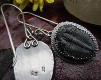 Fossilized Trilobite and Sterling Silver Earrings # 2