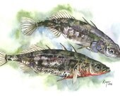 Limited Edition GICLEE MINI Print / Watercolor and Ink Painting of Threespine Sticklebacks