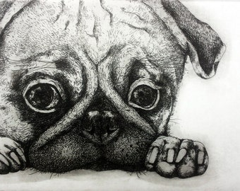 Etching / limited edition original etching (printmaking / graphic art) / original print / original art / dog etching / pug - 'Pug'