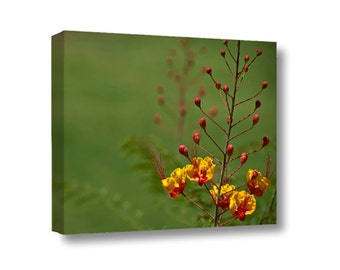 Large Canvas Wall Art Decor Mexican Bird of Paradise Flower