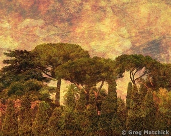 """Fine Art Sepia Photography of the Rome Landscape - """"The Pines of Rome"""" - Composite Print"""