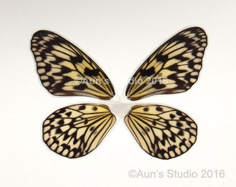 Real Laminated Butterfly Wings - Ready to use - Tree Nymph butterfly