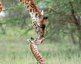Nursery Wall Art, SAFARI BABY ANIMAL Photography, Set of 4, Elephant, Lion, Cheetah, Giraffe, Child Room, Safari Nursery, Baby Animal Print