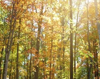 Autumn Trees Photo - Square Photo - Wall Print - Tree Photograph - Nature Photography - Fall Photography - Nature Photograph - Autumn Colors