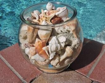 Shells - Beach Decor - Sea Shell Arrangement - Palm Island, Florida - Gulf of Mexico -  Sand Dollar, Shark Teeth,  Coral, Sea Glass