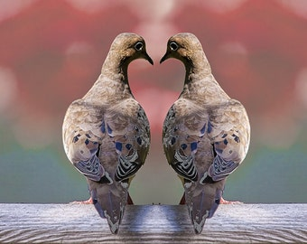 Dove Mourning Birds in Love Romance with the shape of a Valentine Heart No.100 Alt2 A Fine Art Bird Photograph