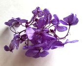 1 Pack (40 flowers)  Dying Small Leaf  Real Dry Hydrangea Glass Ball Filler Purple