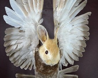 taxidermy of rabbit head and pigeon  freak rabbit