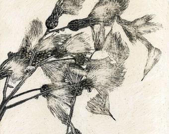 Thistledown on the Wind - Art Card of Original Scraperboard work