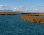 Digital Download Photo Cerulean Blue Bear Lake Marsh Natural Art