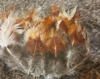 Cinnamon Mix - Plumage Feathers - Lot of 35