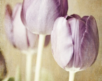 Pastel Purple Tulips Print or Canvas Art, Purple Shabby Chic Decor, Purple Nursery Decor, Purple Bedroom Decor, Pastel Purple Flowers.