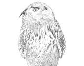 Owl illustration print, Owl pencil drawing, owl graphite drawing Print, owl drawing, Eagle Owl print, eagle Owl drawing A4 size, OD7416