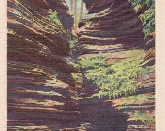 Wisconsin Dells, Fern Garden, Cold Water Canyon, Wisconsin - Vintage Postcard - Postcard - Unused (B)