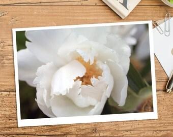 Peony Photo Notecard, Blank Greeting Card, Photo Greeting Card, Floral Card, Note Card, Floral Photo Notecard, Blank Stationery