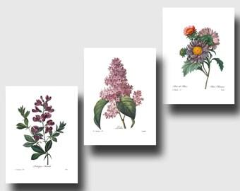 Set of Botanical Prints (Purple Wall Art, Purple Nursery Art, Purple Flower Art, Purple Room Decor) Redoute Botanical Wall Art, Set of 3