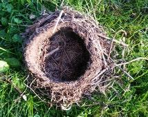 Robins Nest, Bird's  Nest, Bird Nest, Real Bird Nest, Natural Bird Nest, Nature Found Nest, Central Wisconsin