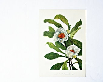 Vintage 1950's Botanical Bookplate - Franklinia & Stewartia Flowers- Spring Home Decor,Gifts for Her, Mothers Day, Summer Boho Cottage Decor
