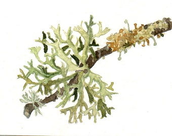 Lichens, Aceo original watercolour painting
