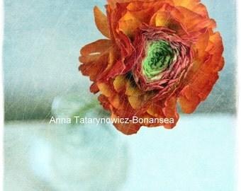 Art photography printed * flower * 30cm x 30cm