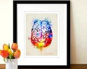 "Fine Art Print - ""Watercolor Brain "" 8.5"" x 11"",Anatomy Medical print, Neurologist Gift, Nurse gift, Neurosurgeon gift, Psychologist gift"