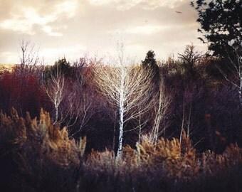 Fine Art Photography Print, Vintage Tree Landscape Art, Forest Home Decor Print- Into The Woods Print