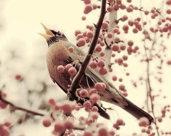 Bird Photograph - Autumn Berry - Bird Art - Robin and Berry Tree - Wall Decor - Home Decor - Fine Art - Hello Autumn - Nature Photography