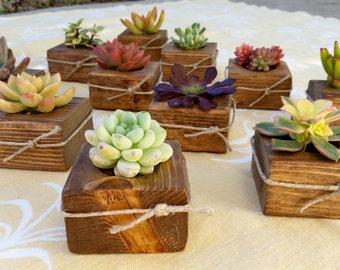 12 Succulent WEDDING Favors, Succulent Bridal Shower favor, Baby shower favor, Special Event Favor, Spring or summer