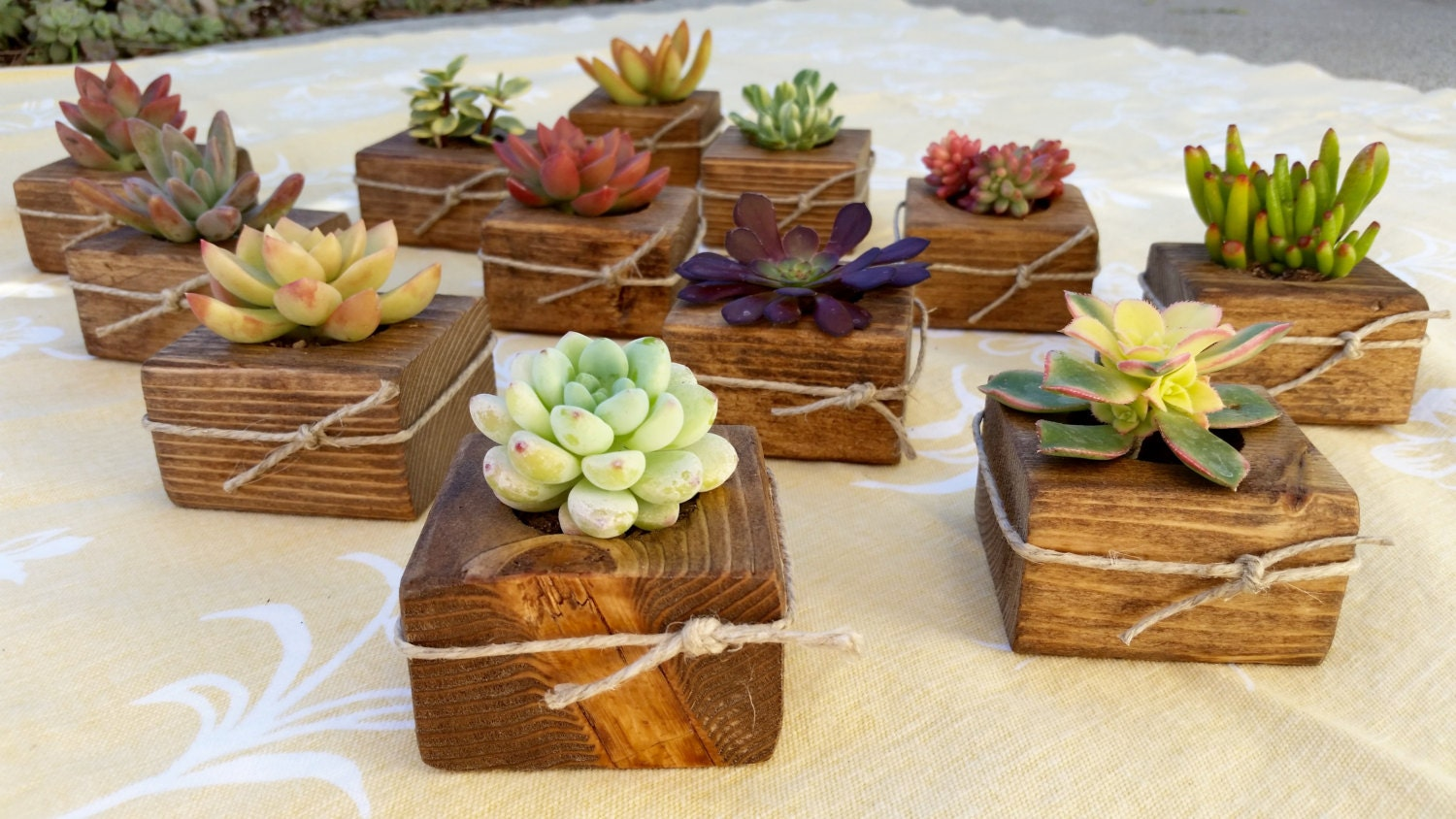 20 succulent wedding favors succulent bridal shower favor for Wedding favor supplies