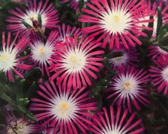 Flower Photo Greeting Card - Blank Greeting Card