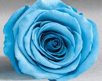 Preserved*Blue  Roses, Preserved  Roses, Roses for Bouquet, Prom Roses, Preserved Rose Bouquet  Simply Beautiful !