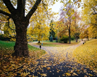 Autumn color and walkway at Letná Park, in Prague, Czech Republic. | Photo Print, Stretched Canvas, or Metal Print.