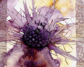 """Purple Sea Holly 