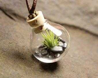 AIR chain plans Hematite mini terrarium