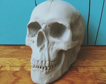 Concrete Human Skull