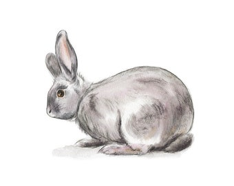 Curious // animals, pet, animal print, art print, neutral, black, wall art, travel, rabbit, bunny